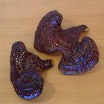 Reiši, Ganoderma lucidum, Hrastova sjajnica