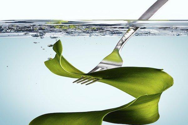 alge-u-ishrani